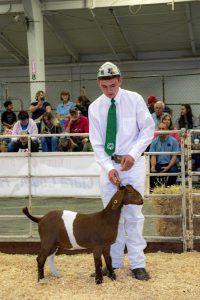 EDay 1 Goats (78)