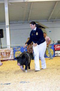 EDay 3 Pigs (2619)